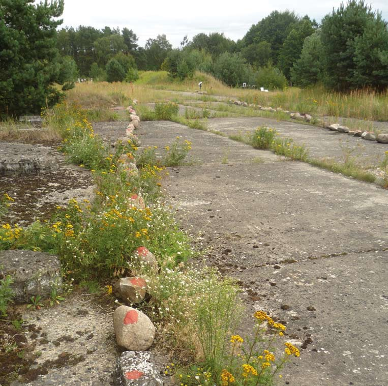 Mit Steinen ist der Grundriss der ehemaligen Baracken auf dem Boden markiert. Von Pflanzen überwucherte Betonplatten, im Hintergrund Bäume.