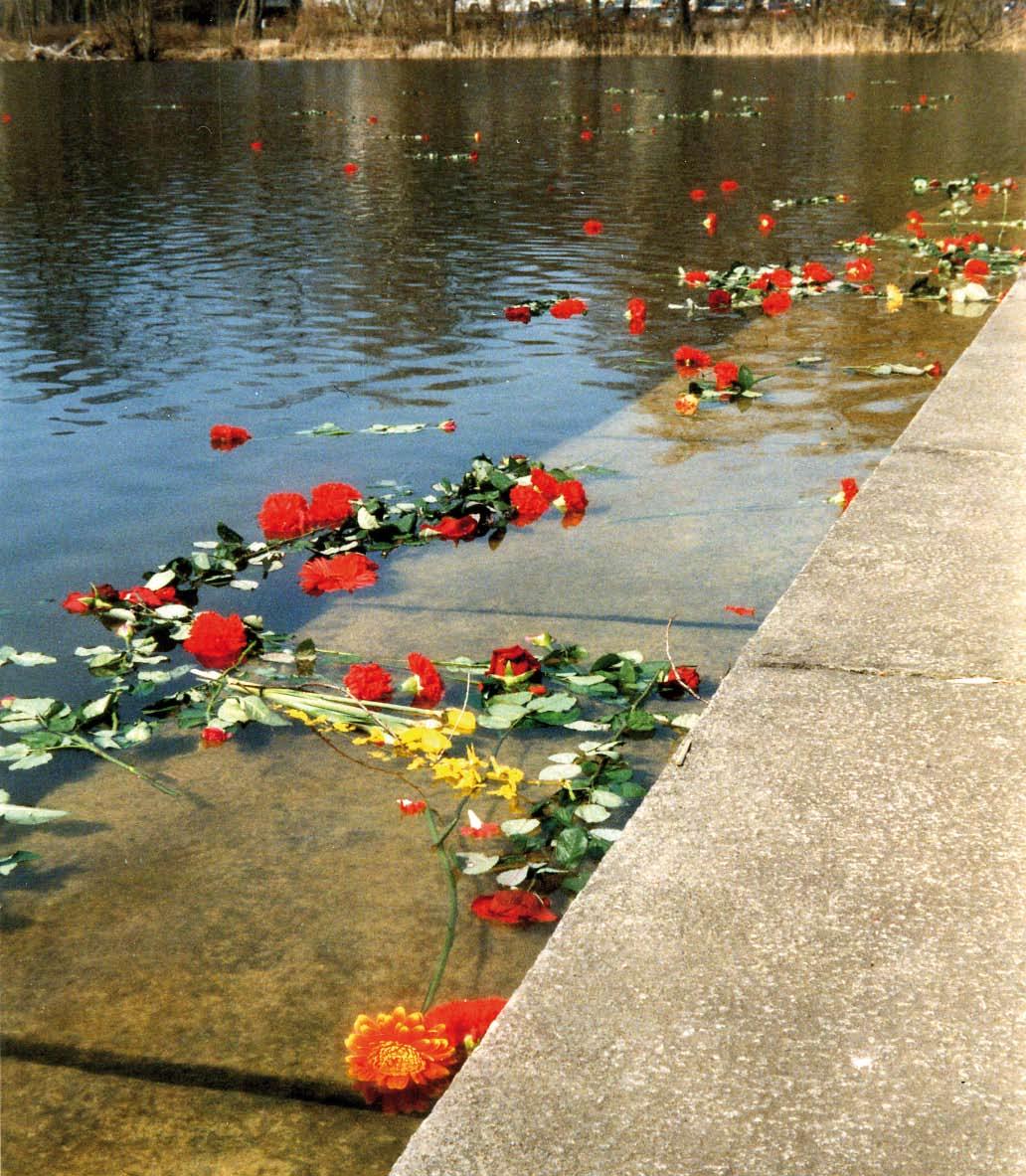 Blumen, die am Ufer eines Teiches auf dem Wasser treiben.